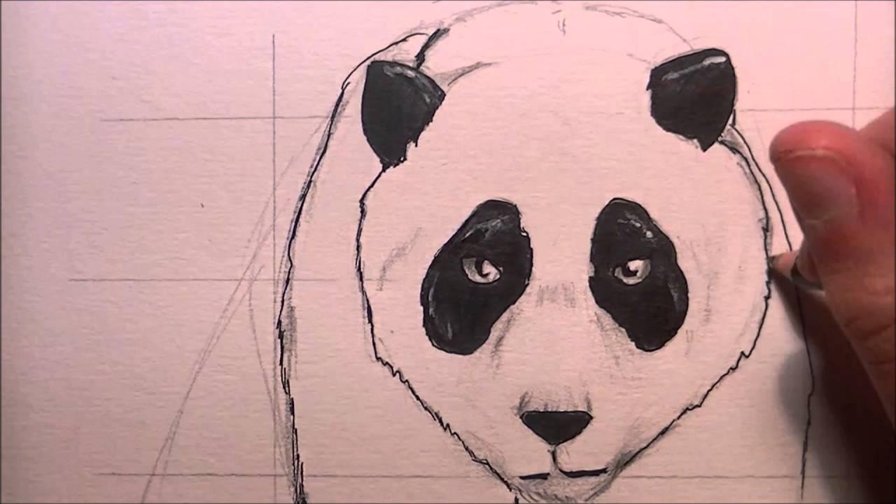 Comment Dessiner Un Panda Réaliste Time Lapse