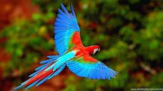 16 Most Beautiful Parrots In The World