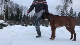 Барьер через ногу.Как научить собаку