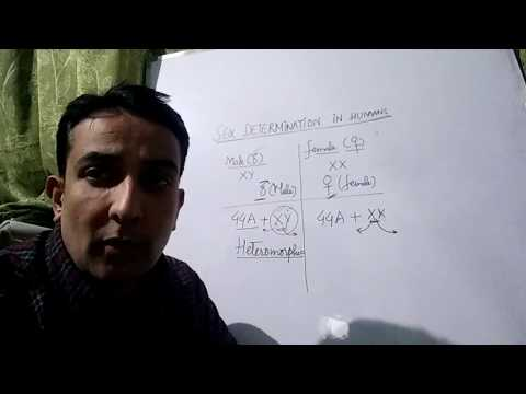Lecture on Sex determination in humans by Mudabir Qurashi