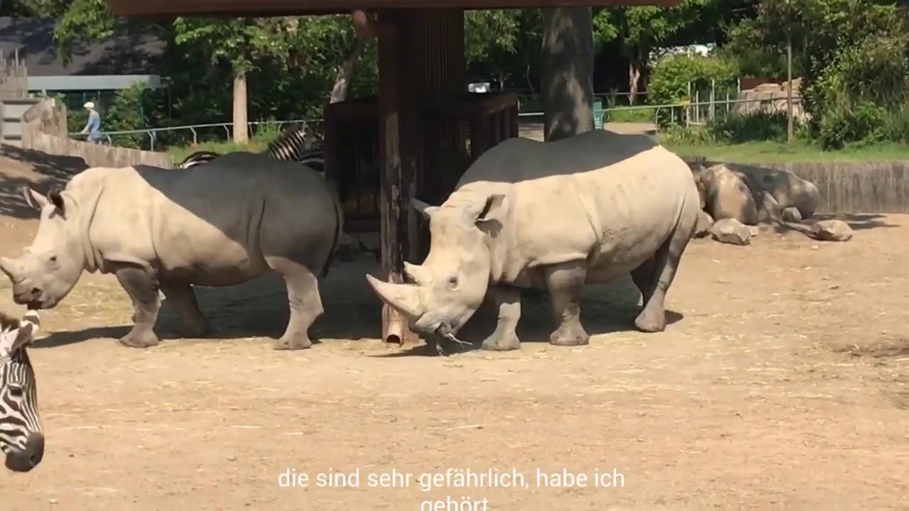 Tierfilm (dyrefilm)