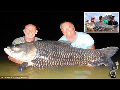 Fishermen use dead friend's ashes as bait to catch 180-pound carp