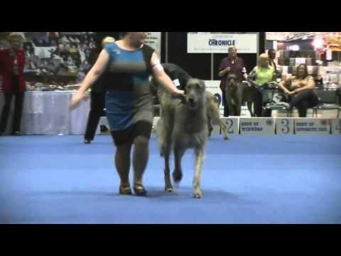 12-13-2014 Part 1 of 3  Eukanuba National Championship - Irish Wolfhounds