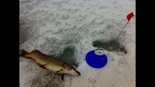 Жор щуки на жерлицу Удачная рыбалка на щуку оз Речное Узунколь 2020 г