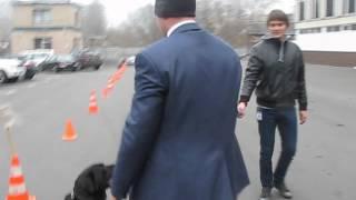 Охрана Януковича научила собаку отдавать честь(Охрана Януковича научила собаку отдавать честь., 2012-11-30T09:03:02.000Z)