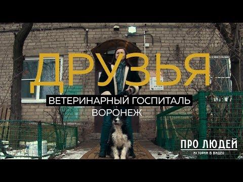 """Ветеринарный госпиталь """"Друзья"""". Воронеж"""