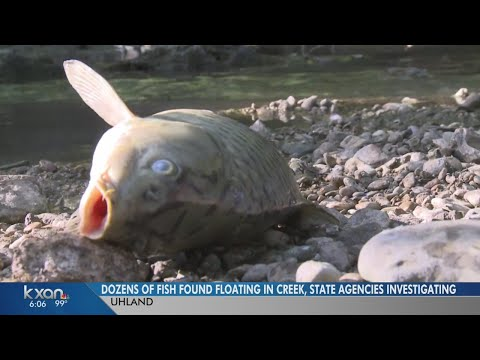 Dozens of fish found floating in Plum Creek, state agencies investigating