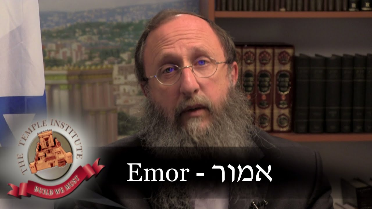 a jewish history of the torah portion emor Jewish history jewish religion weekly torah portion: emor posted on 12 the farmer separates from his produce a portion between one-sixtieth and one.