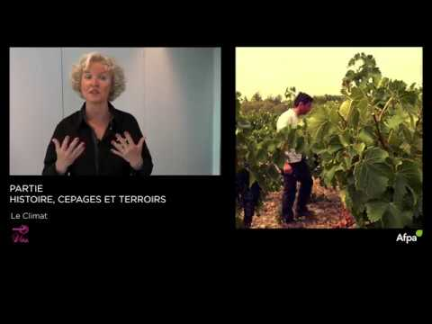 UA1 - Vidéo 6  - Le climat