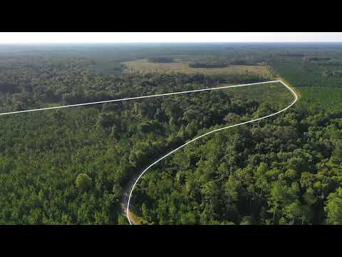 McGee Branch Hunting - 264 Acres Of Hunting And Timberland FOR SALE In Bronson, Fl