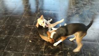 Funny Dogs Playing - Adorable Babies Playing With Dogs and Cats - Funny Babies Compilation 2020