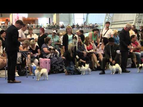 World Dog Show 2014, Helsinki, Papillons