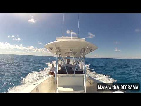 Quick Bimini one day trip