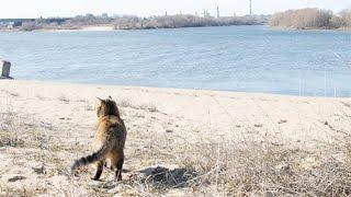 Прогулка с кошкой по пляжу