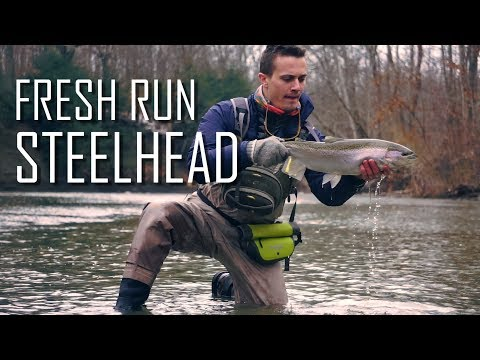 Fresh Run Erie Steelhead