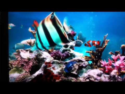Beautiful Underwater Relaxing Realistic Screensaver ( Sim Aquarium )