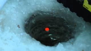 Рибалка взимку в межах Києва