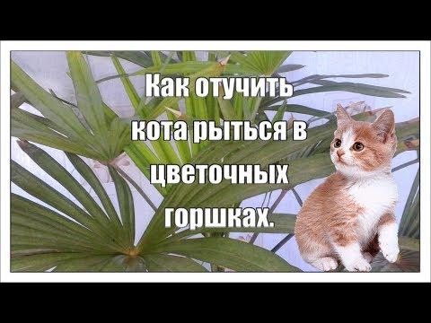 Вопрос: Почему кошка ест хлорофитум (из всех цветов) Как отучить?