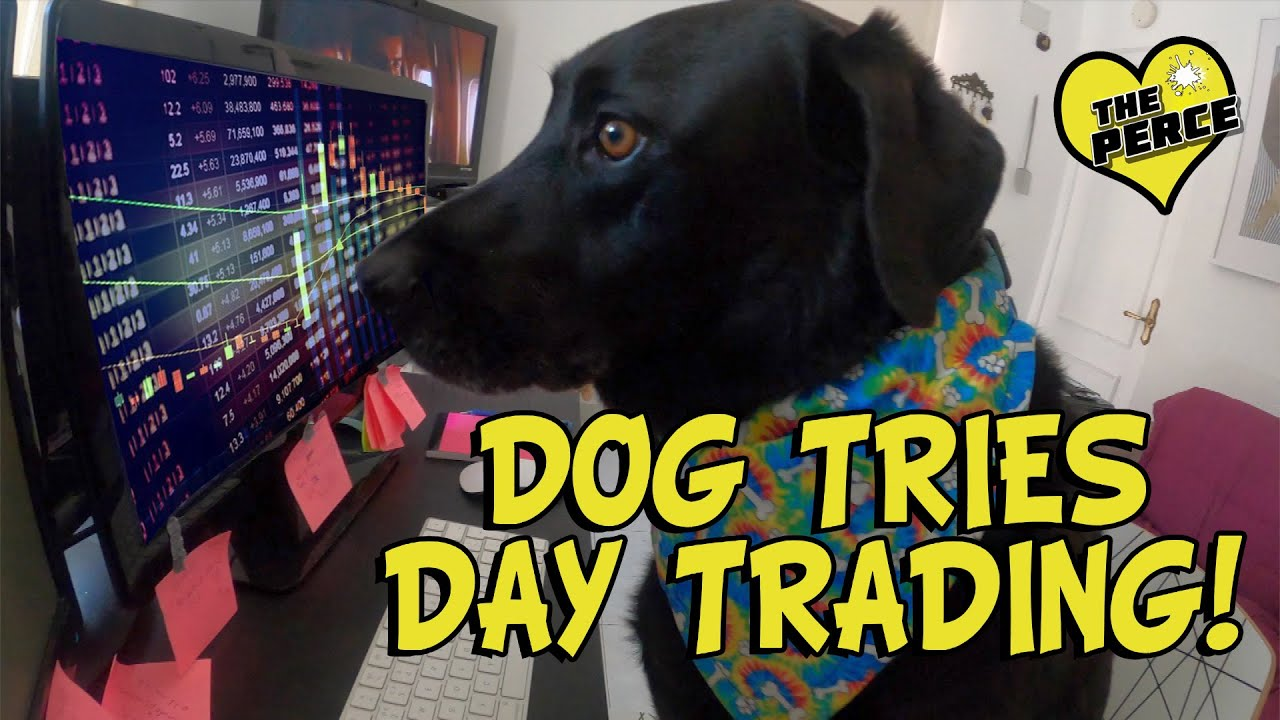 Day Trading - Our Black Labrador has a go.