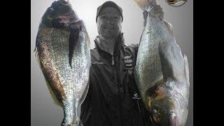 pescadoradatanero DOS DORADAS GIGANTES XXL PARTE II pesca dorada fishing orata peche dorade.wmv