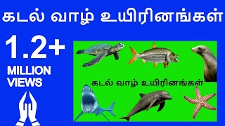 Learn Tamil sea animals names video for kids and Children| Tamil Flashcards