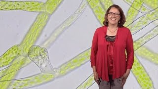 Magdalena Bezanilla (Dartmouth) 1: Understanding cell shape: Big insights from little plants