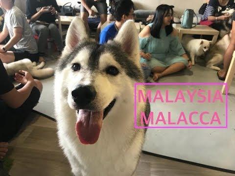 ✈️: Food, Jonker, River Cruise, Huskitory! | Malaysia | Malacca aka Melaka || Travel Diary