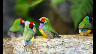 Top 42 Types Of Most Beautiful Finch Birds In The World 42