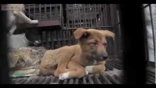 Report cruelty dogs and cats in China / Denuncia crueldad contra perros y gatos en China