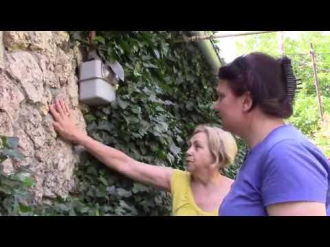 Плющ украшение стен домов. Портит ли плющ стены дома?