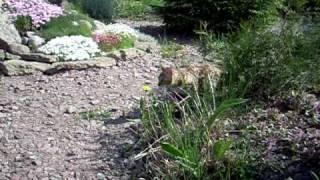 Бенгальская кошка вышла погулять - http://www.bengal.spb.ru