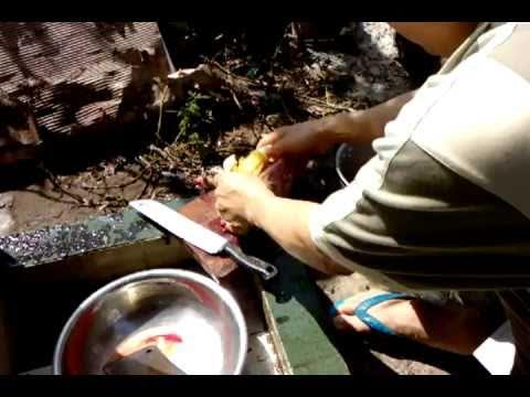Cách chặt thịt gà, làm thịt gà kho 15p.