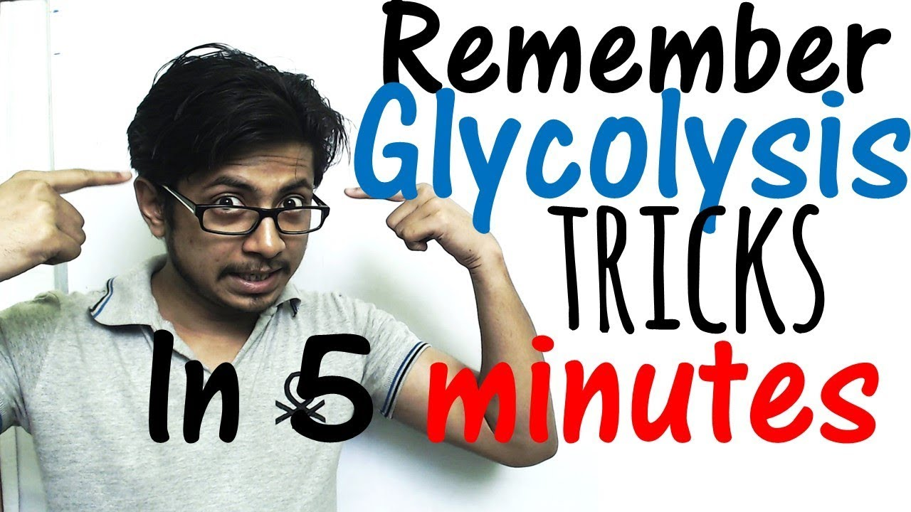 How to remember glycolysis in 5 minutes easy glycolysis trick how to remember glycolysis in 5 minutes easy glycolysis trick ccuart Choice Image