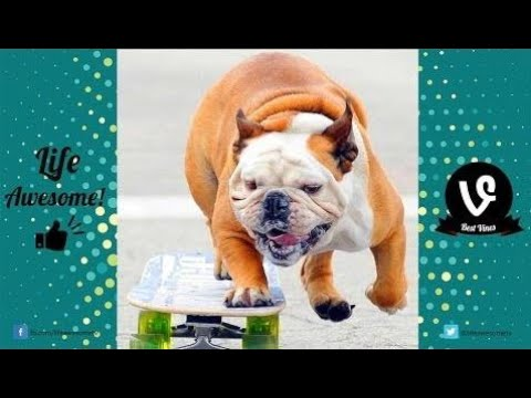 Try Not to Laugh While Watching Best Funny Videos of Animals Compilation 2017 by Life Awesome
