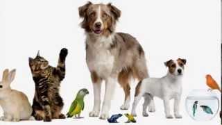 Английский для детей. I have got + домашнее животное