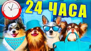 24 ЧАСА В ОДНОМ ЦВЕТЕ В ПОХОДЕ ГЛАЗАМИ СОБАК БЛОГЕРОВ! ЕДА ОДНОГО ЦВЕТА