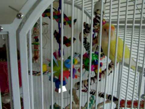 Awesome Cage Set-up for 1 Cockatiel or 2 Lovebirds.