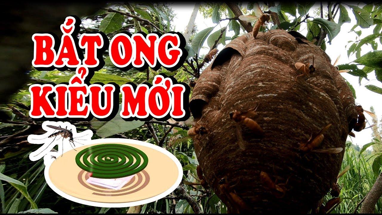 Bắt Ong Rừng Bằng Nhang Muỗi   và cái kết đắng lòng  