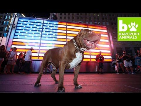 TEASER: Hulk Takes Over New York