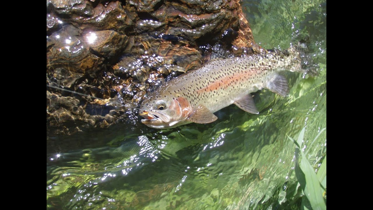 Trout fishing on wilderness unlimited 39 s white river ranch for Oregon game and fish