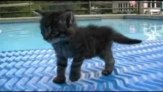 i are cute kitten