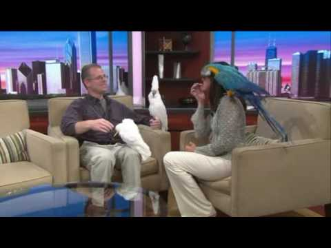 RESCUE THE BIRDS - ADOPT A PET PARROT