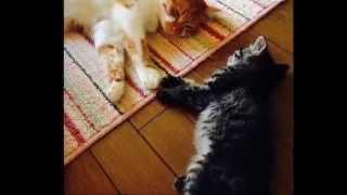 猫かわいい!ローラ,桐谷美玲,北川景子,佐藤健,中川翔子も好きな猫の画...