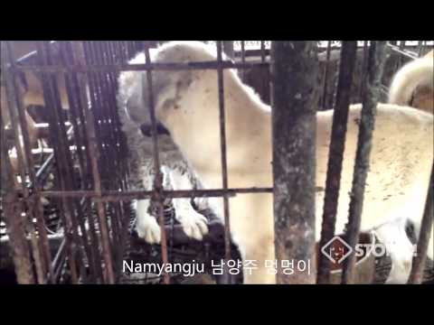 Shocking Cruelty of South Korean Dog Meat Industry Part 1 of 2