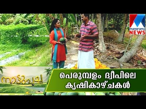 Vegitable farming in Perumbalam island | Nattupacha | Manorama News