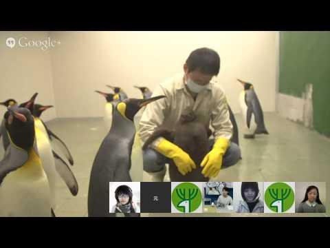 「國王企鵝給問嗎?」Google+ Hangouts 給你問