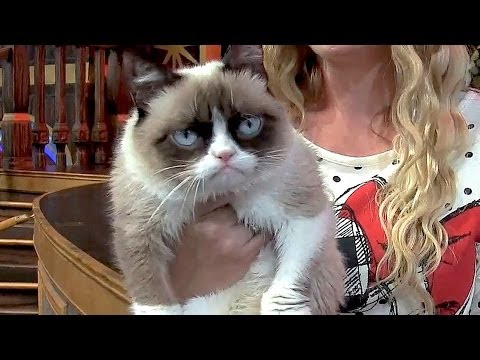 Grumpy Cat at Disneyland, meet-and-greet and interview for Disney Side event