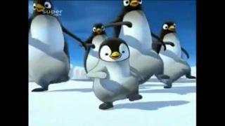 (Official Video) SENAM PINGUIN
