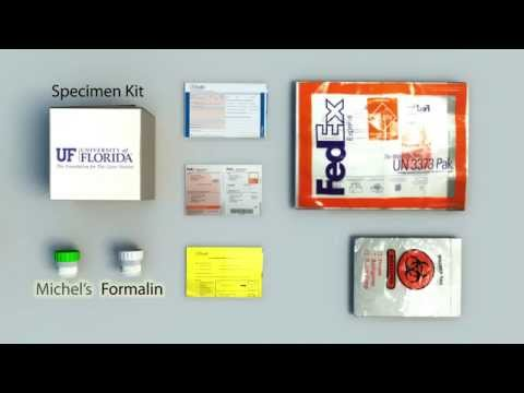 uf-health-pathology-laboratories-renal-specimen-collection-and-handling-tutorial