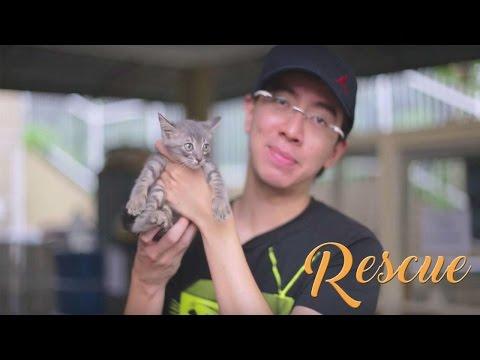 RESCUE - A Short Documentary of Animals Adoption